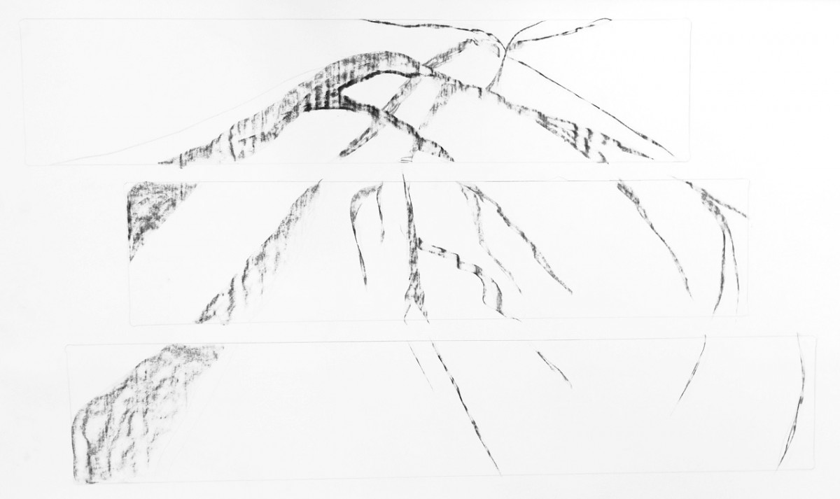 tree drawings jyl bonaguro
