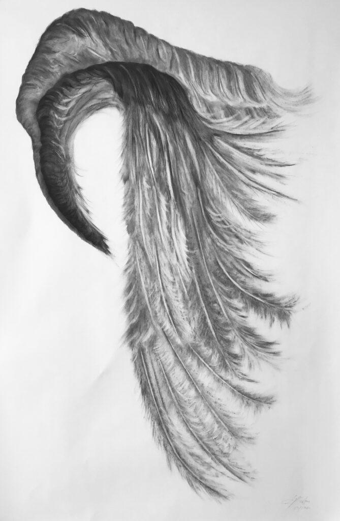Higher Spiral Wing Drawing Jyl Bonaguro